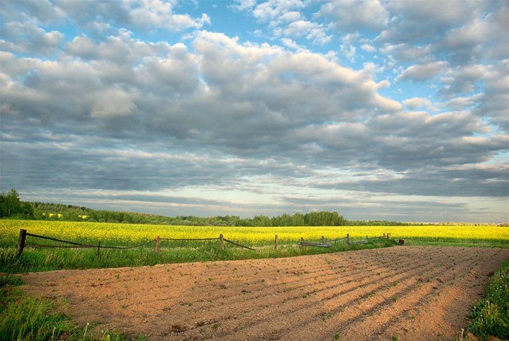 Услуги межевания: Межевание земельных участков в Землеустройство, ООО