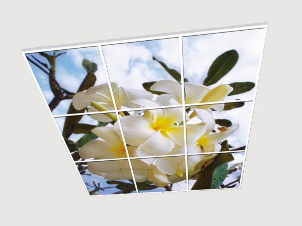 Витражные (стеклянные) потолки: Серия «Весна» в Мир Потолков