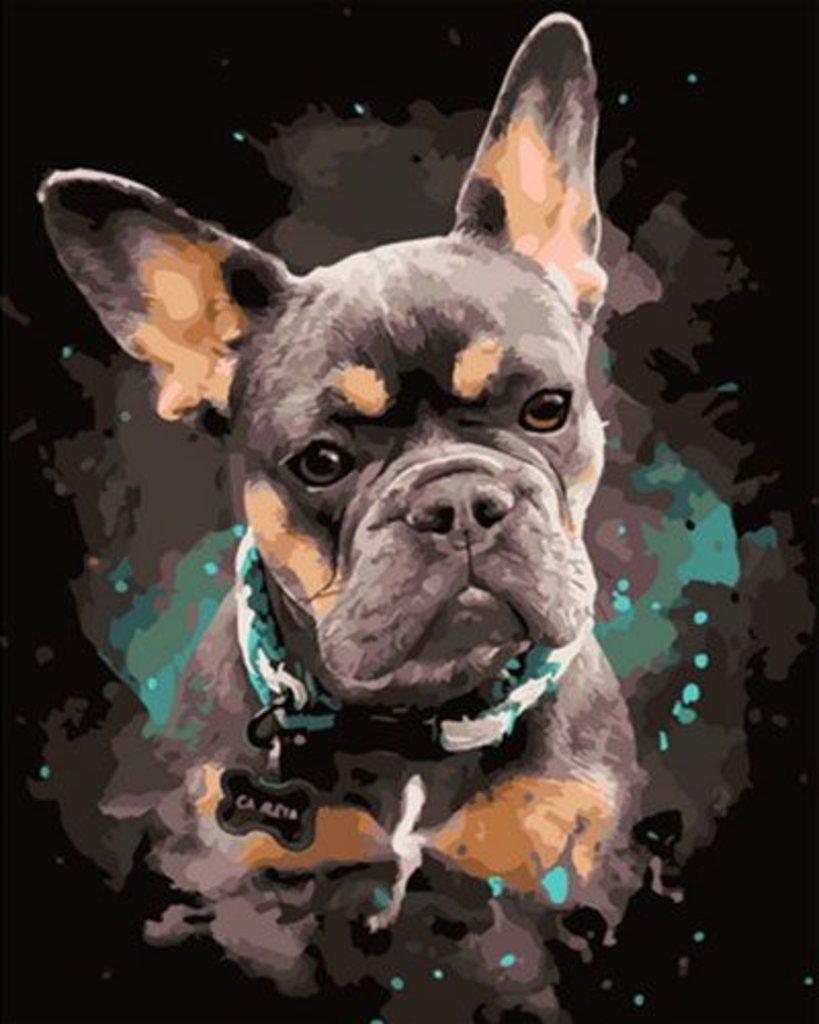 Картины по номерам: Картина по номерам Paintboy 40*50 OK11109 Бульдог в Шедевр, художественный салон