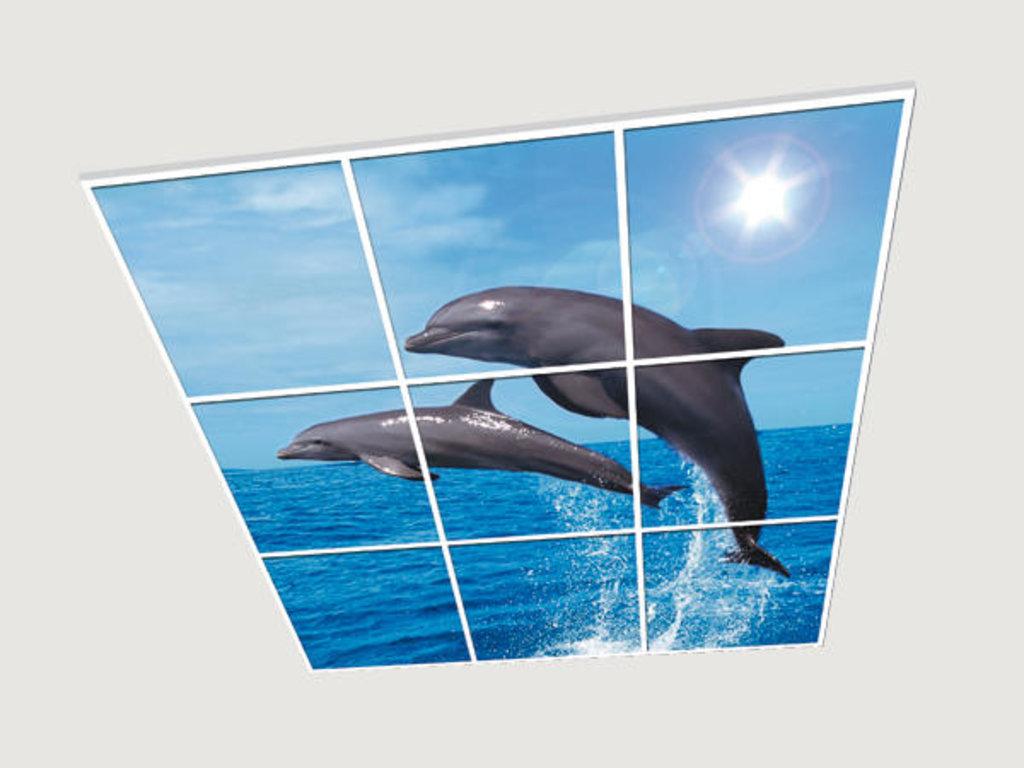 Витражные (стеклянные) потолки: Серия «Дельфины» в Мир Потолков