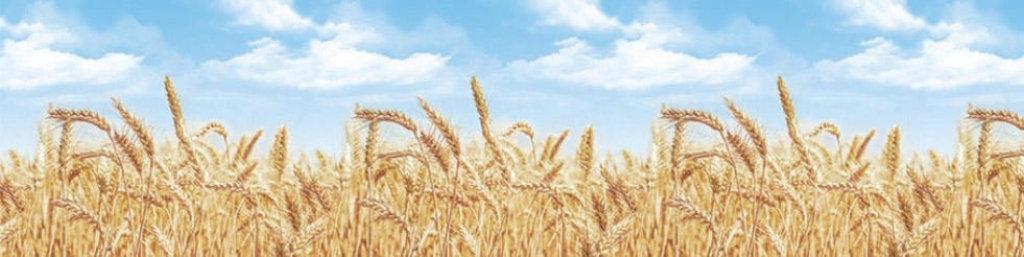 Декоративные интерьерные панели (фартуки для кухни): Интерьерная декоративная панель Пшеница (3х0,6м) в Мир Потолков