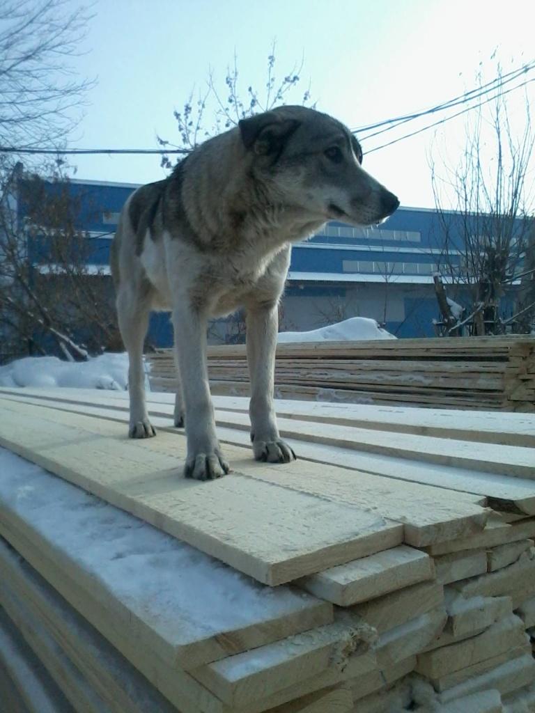 Доски деревянные: Доска обрезная 50мм, 27мм в Пилим Лес